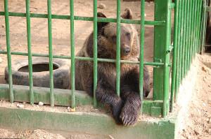 Jonge beer die gevonden is langs de autoweg M3.